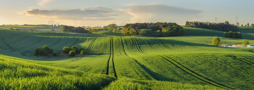 green, shiny fields of young grain on wavy fields in Germany - High resolution panorama
