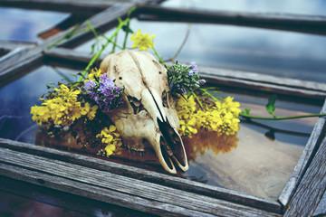Calavera de ciervo con flores sobre una ventana