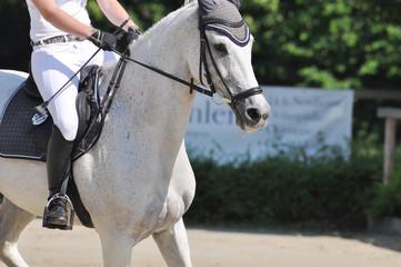 Sportpferd mit Reiterin auf dem Reitturnierplatz, Pferd mit Reiter im Detail
