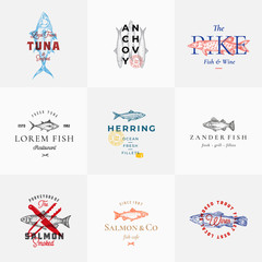 Premium Quality Retro Fish Vector Signs or Logo Templates Set. Hand Drawn Vintage Fish Sketches with Classy Typography, Tuna, Trout, Salmon, Herring etc. Great Restaurant and Seafood Emblems.