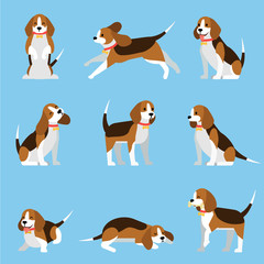 Creative collection with cute beagle dog . Vector illustrations with funny puppy in different poses. Lovely pet concept