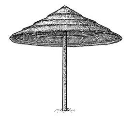 Beach palm leaf umbrella illustration, drawing, engraving, ink, line art, vector