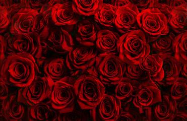 miljoen verse rode rozen geïsoleerd op een zwarte achtergrond. Wenskaart met rozen