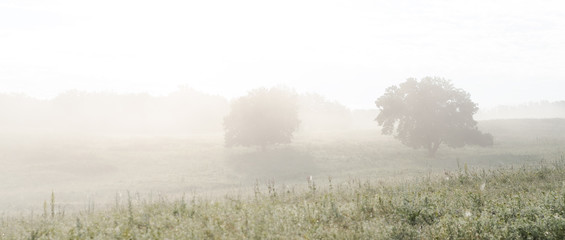Two Trees On The Field In The Fog. Landscape At Dawn.