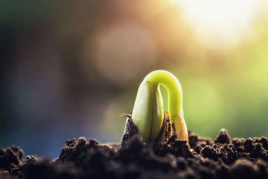 new green sprout growing on soil with sunshine