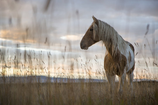 Mustang in a Meadow