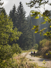 Two men riding racing bicycle on cycling tour in Black Forest, Baden-Württemberg, Germany
