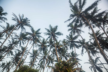 Palm trees and sky, Indian ocean, Sri Lanka