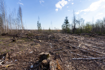 deforestation with a lot of abandoned branches