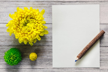 Chrysanthemums and Craspedia with Paper and Pencil