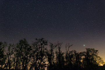 countless stars with planet Jupiter over the silhouettes of old trees