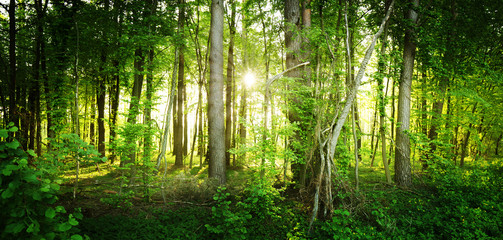 The natural wild forest illuminated by the rays of the sun