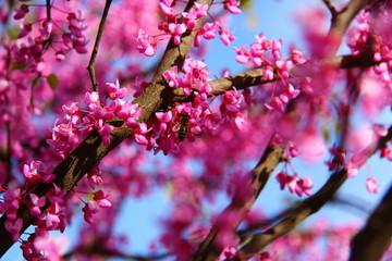 flowers spring pink bee