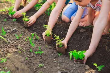 Fototapeta Children's hands planting young tree on black soil together as the world's concept of rescue obraz