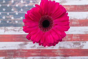 Gerbera daisy flower on USA flag background with room for text