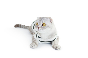 Cat in top on white background