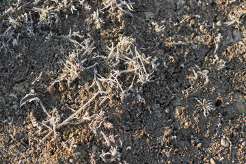 green  frost-covered soil ground with no grass