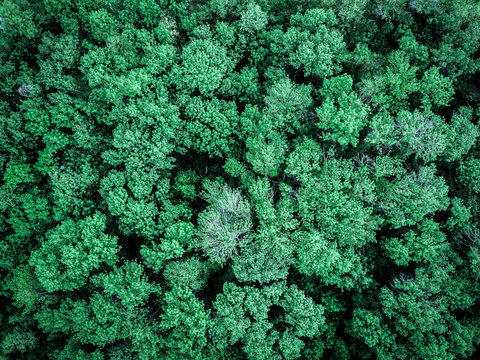 aerial moody dark forest texture top down