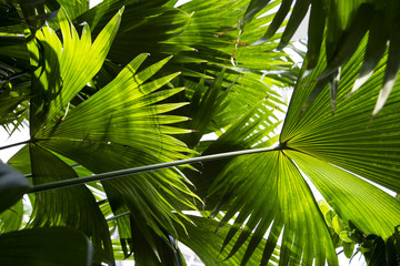 bright green palm leaves