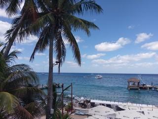 sea; body of water; tropics; palm tree; sky; arecales; caribbean