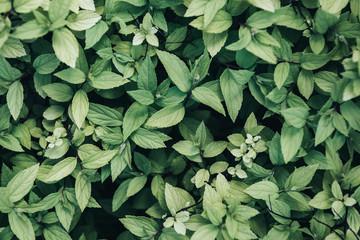 full frame image of green leaves background