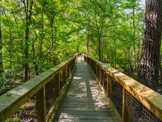 Boardwalk Through Forest - Congaree National Park