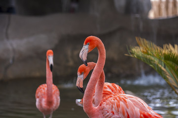 Flamingos at the zoo in Mexico