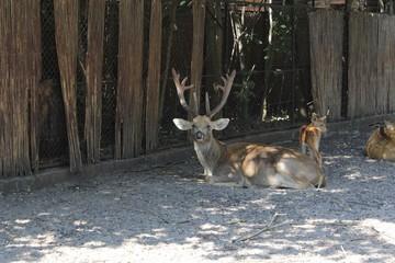 Deer photography art in zoo wild life