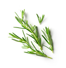 fresh raw rosemary