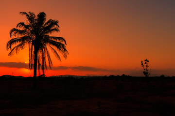sunset in sky and silhouette coconut tree beautiful colorful landscape countryside twilight time art of nature