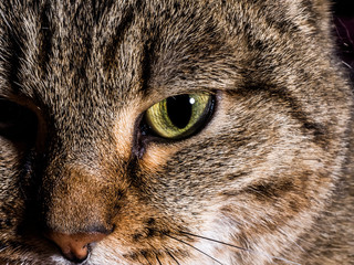 Closeup of Cat Eyes.