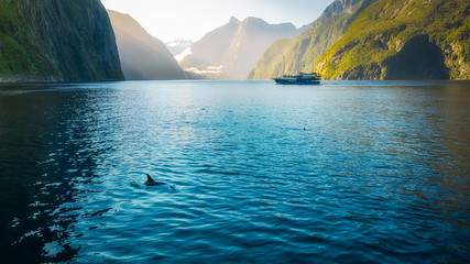 Morning sun glow and dolphins at Milford Sound in Fiordland National Park, New Zealand