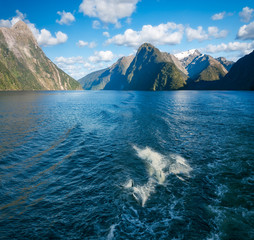 Playful Moments- Bottlenose dolphins swimming along playfully behind a cruise boat in the fjord at Milford Sound, Fiordland National Park, New Zealand