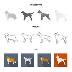St. Bernard, retriever,doberman, labrador. Dog breeds set collection icons in flat,outline,monochrome style vector symbol stock illustration web.