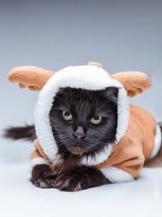 Image of black cat in deer suit