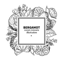 Bergamot vector drawing frame. Isolated vintage  template of cit