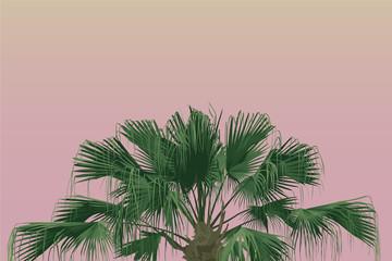 Chinese Fan Palm warm pastel