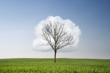 Single dry tree at the field with cloud in shape of leaves and copy space