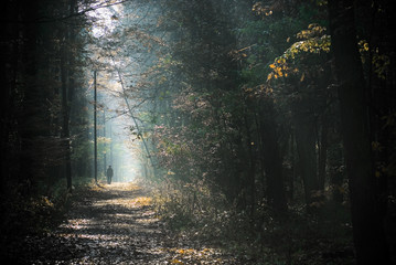 A man walking a path in the forest
