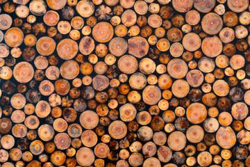 Felled wood. Wood texture