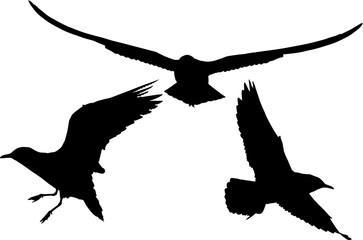 set of three gull black silhouettes