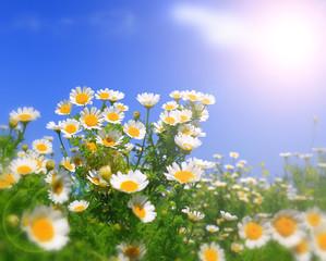 Wall Mural - fresh Summer wildflowers
