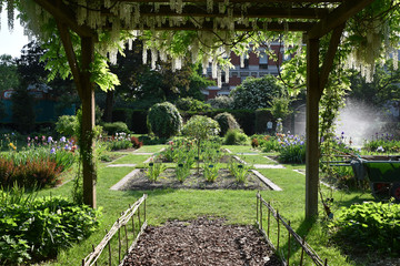 Jardin d'iris au printemps