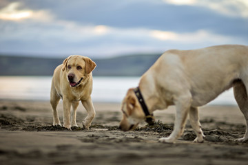 Two dogs standing at beach