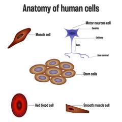 Anatomy of human cells isolated on white background as Health care and science concept. vector illustration.