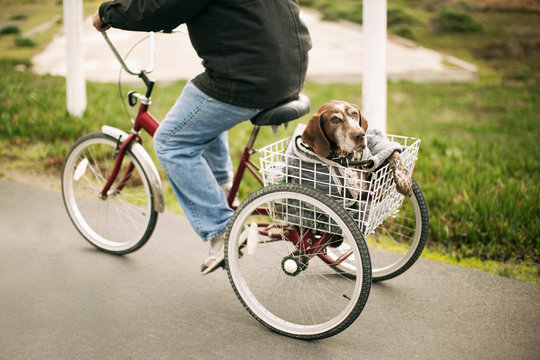 Low section of man carrying dog in tricycle basket