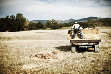 Man stands on the back of a truck holding on to a hay bale.