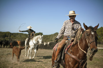 Cowboys roping cattle.