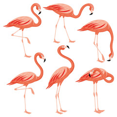 Tuinposter Flamingo Pink flamingos set on a white background.