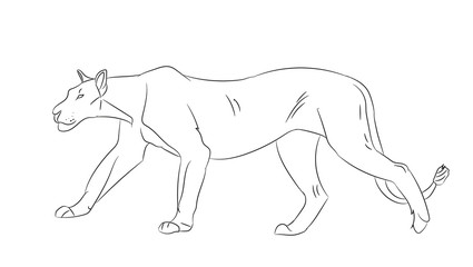lioness with lines, sketch, vector